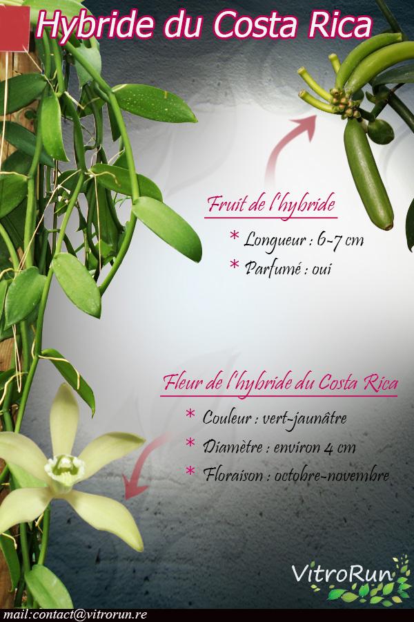 Fiche hybride Costa Rica